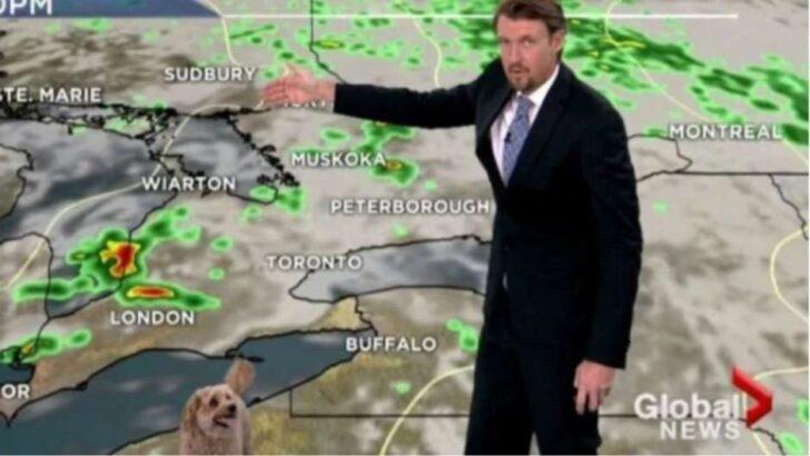 """Cão invade previsão do tempo em jornal e viraliza ao """"farejar"""" nuvens"""