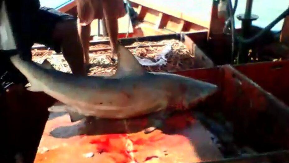 Pescador tenta pegar tubarão em alto mar, mas acaba sendo mordido, a 2km da costa