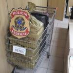 Mulher é presa com 36 kg de maconha em aeroporto na grande natal