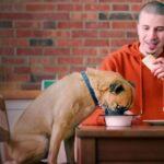 Séries com cães e gatos contam a vida de apaixonados por pets; confira
