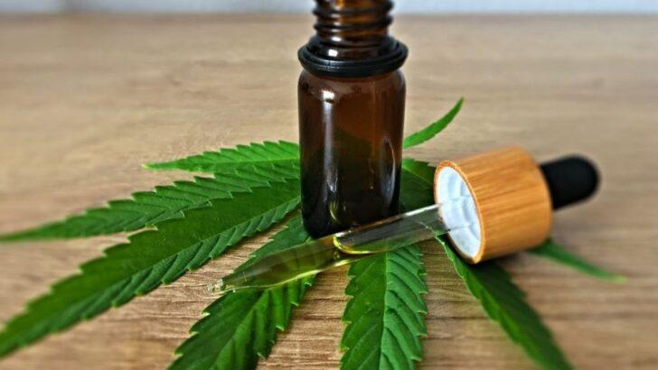 Direito a tratamento de saúde com cannabis é aprovado em comissão da alrn