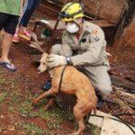 Cachorro cai em fossa e ajuda bombeiros no próprio resgate